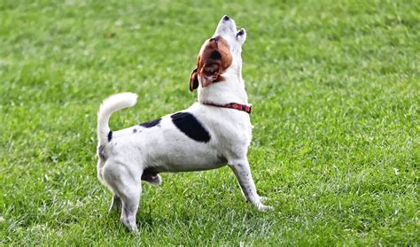how to keep dog from barking pet owners could have to pay up for barking meowing