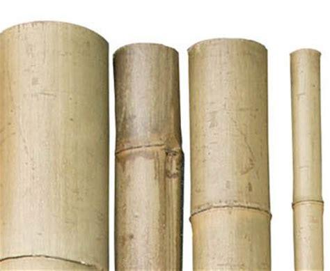 bambus discount bambusrohr quot tokio quot lackiert g 252 nstig kaufen