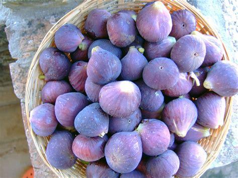 le vogelkäfig la figue faux fruit mais vrai plaisir recettes de figues