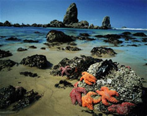 tide tables yachats oregon the pacific coast scenic byways tripcheck oregon