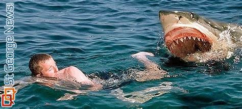how to an attack shark attacks how to avoid them how to survive them st george news