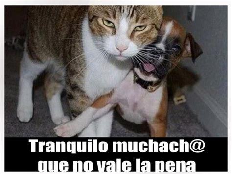 imagenes de animales graciosos para facebook 6 divertidas imagenes de animales graciosos con frases