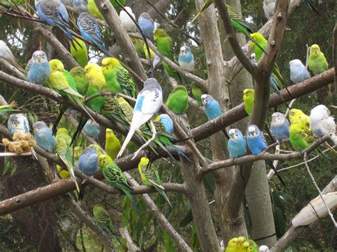 Budgies are Awesome: June 2010