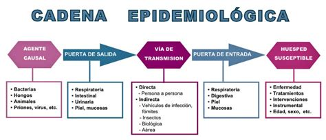cadena epidemiologica vias de transmision celadores online de instituciones sanitarias tema 30