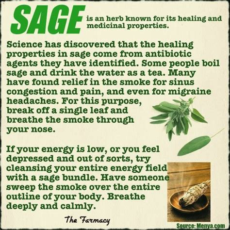 How To Find Negative Energy At Home herb profile sage homestead amp survival