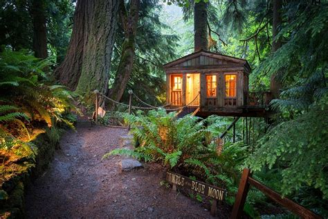 Yellow Treehouse Restaurant New Zealand - most amazing tree houses in the world
