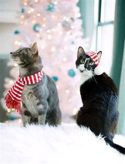 images of merry christmas kittens cats christmas new years eve happy merry holiday dogs