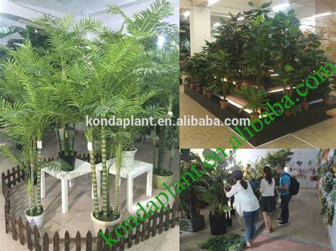 decorative plants for home garden 25 best of outdoor decorative plants