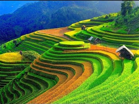 wonderful rice terrace fields in mu cang chai