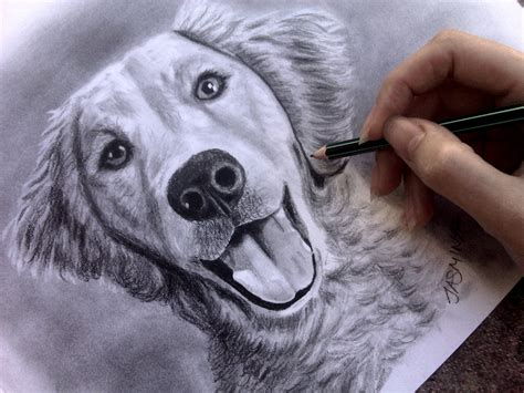 Drawing Dogs by Speed Drawing