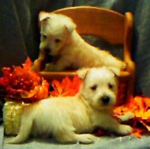 puppies for sale in lake charles la pets lake charles la free classified ads