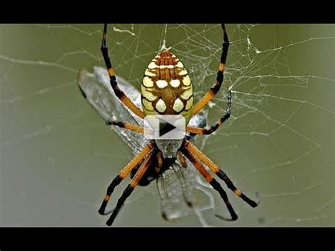 venomous spiders  space station youtube