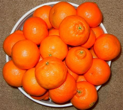3 fruit types 91 best images about anything citrus on