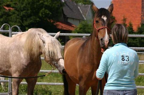 pferde beim decken ablauf team