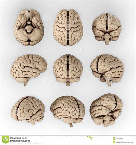 imagenes libres cerebro cerebro im 225 genes de archivo libres de regal 237 as imagen