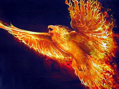 the phoenix and the fofoa the golden phoenix