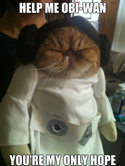 Star Wars Cat Meme - derpy cat leia www meme lol com cute cat stuff