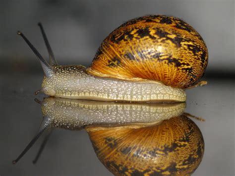 caracoles y babosas de 8428215995 plaga de babosas o limacos y de caracoles evitarlas y combatirlas de forma ecol 243 gica