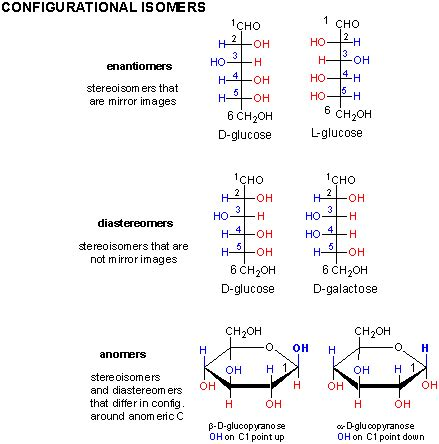d isomer carbohydrates add your page title