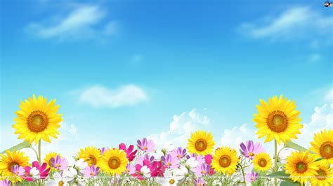 of summer summer wallpaper images wallpapersafari