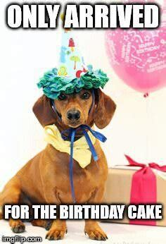 Birthday Cake Dog Meme - top 100 original and funny happy birthday memes part 2