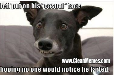 funny dog memes clean google search funny dog pictures