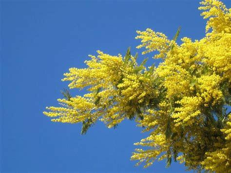 pianta dai fiori gialli piante con fiori alberi latifolie piante con fiori