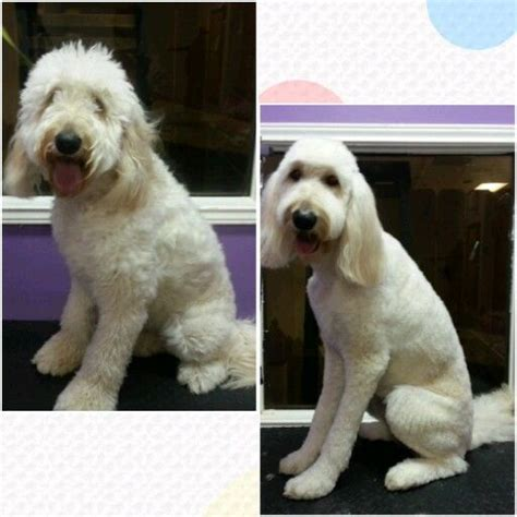 labradoodle grooming cuts picture pinterest the world s catalog of ideas
