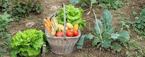 Gardening Vegetables At Home How To Start A Home Vegetable Garden Benefits Saving Money
