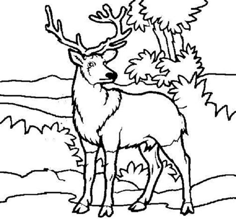 realistic deer coloring pages free realistic deer coloring pages