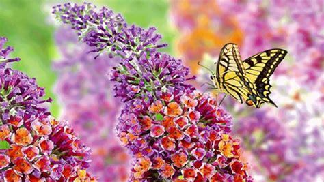 arte fiori fiori in villa parabiago rassegna di artigianato e