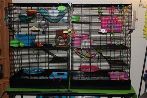 toys and accessories best rat toys and accessories photos 2017 blue maize