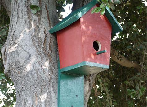 attracting bluebirds to your backyard 11 cool bluebird house plans to attract them to yard the