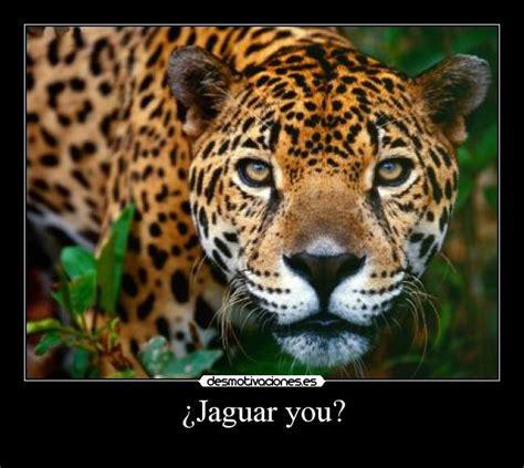 imagenes jaguar you 191 jaguar you desmotivaciones