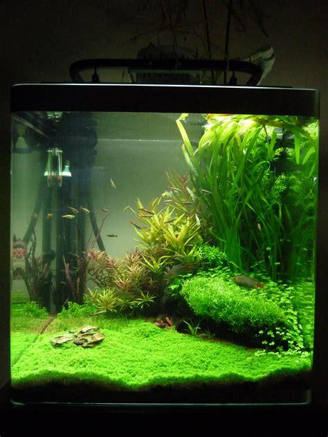 refonte d un aquarium de 150 litres avec des scalaires