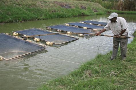 sle of a business plan on catfish farming fish farming business in nigeria how to start nigerian