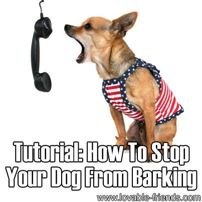 dog barks when i leave how to stop your dog barking when 1556 best schnauzers pure sweet love images on
