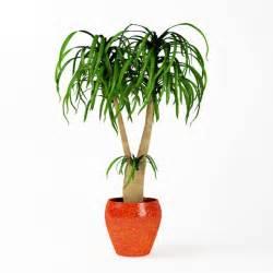 indoor potted plants plant indoor potted plant 3d model cgtrader com