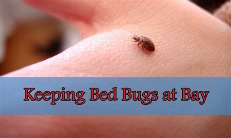 keeping bed bugs away 28 images mothballs medical
