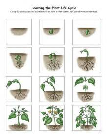 Plant growth sequence cards pre k plant study pinterest plant