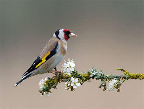 las aves exticas mi 8408127950 en mi bosque m 225 gico p 225 jaros y flores