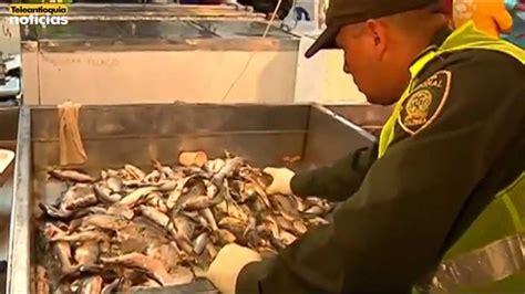 Ahza Maxy el pescado descompuesto causa intoxicaci 243 n