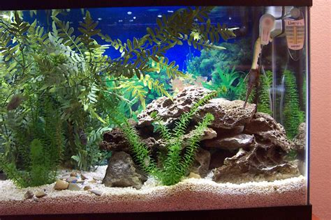 Cichlid Aquascape by Cichlids Tank Exles New Aquascape