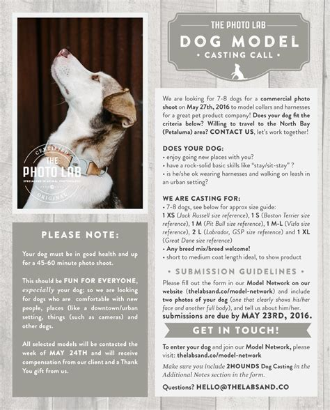 A Call For Model Pets by The Labs Co Model Call San Francisco Bay