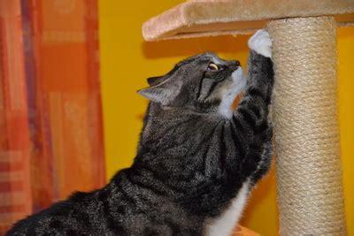 katzenhaltung in der wohnung katzenhaltung in der wohnung teil 1 grundausstattung
