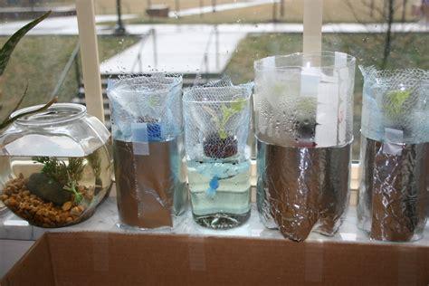 hydroponic lettuce garden  plastic bottles grow