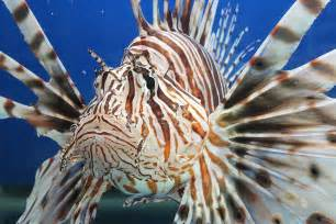 30 fascinating fish facts national aquarium waterblog