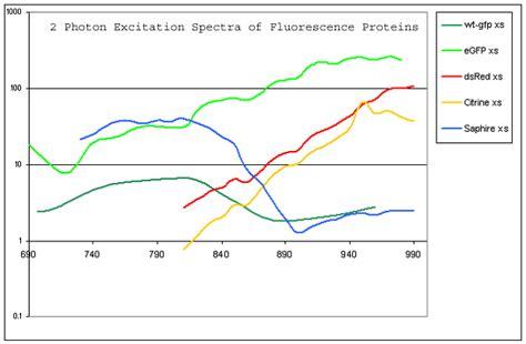 two photon cross section fluorophore databases microscopist co uk