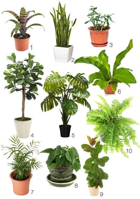 hardest plants to grow how to create your own lush winter blues beating 70s style indoor jungle plants gardens and