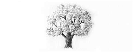 imagenes a lapiz de arboles c 243 mo dibujar 225 rboles a l 225 piz para que se vean realistas